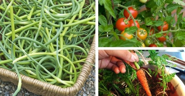 Healthy, Edible Plants To Grow In Your Indoor Garden